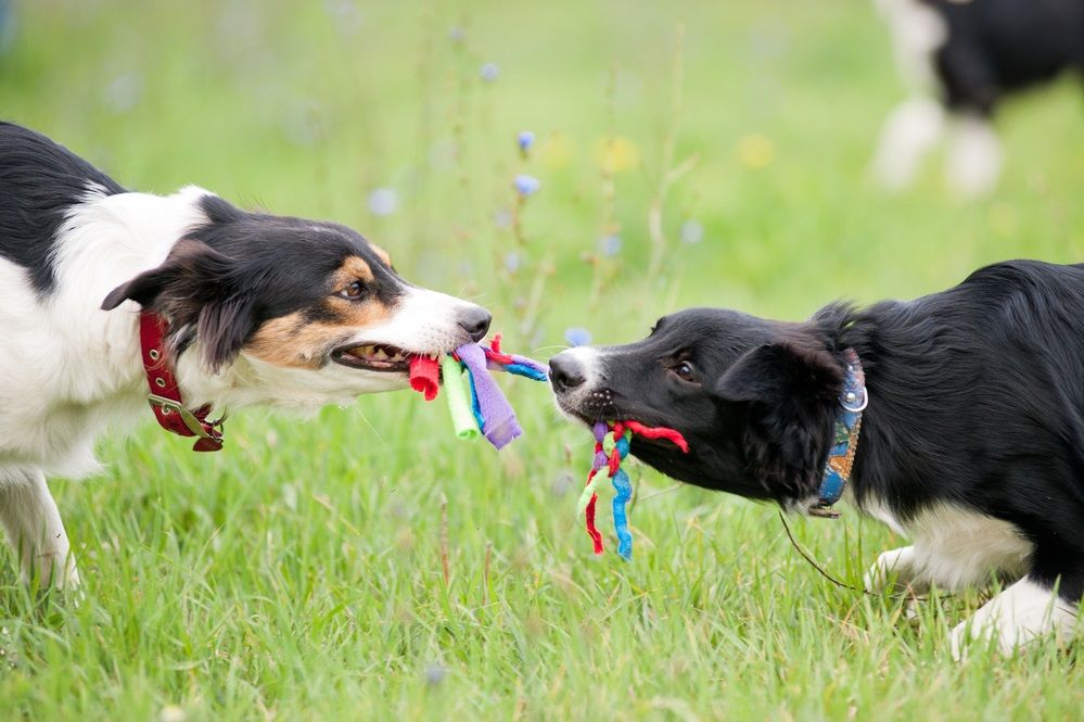 Img juguetes caseros perros ropa gratis
