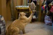 Img juguetes gatos jugar juegos ratones hechos en casa caseros diy animales mascotas listado