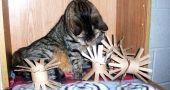 Img juguetes gatos rollos