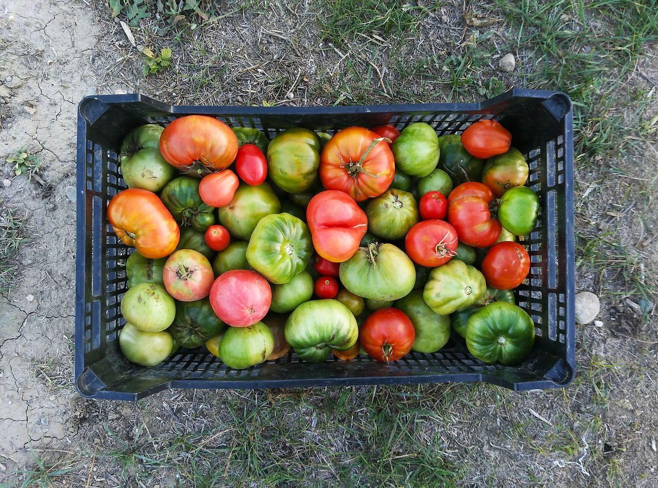 Img kilometro cero tomates hd