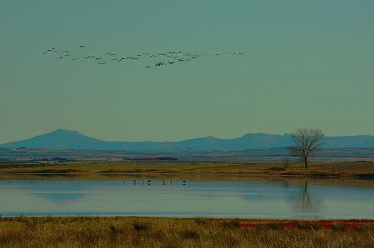 Img laguna gallocanta