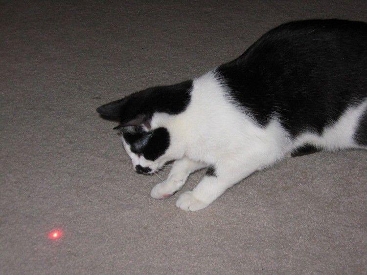 Img laser peligros perros gatos 4 art