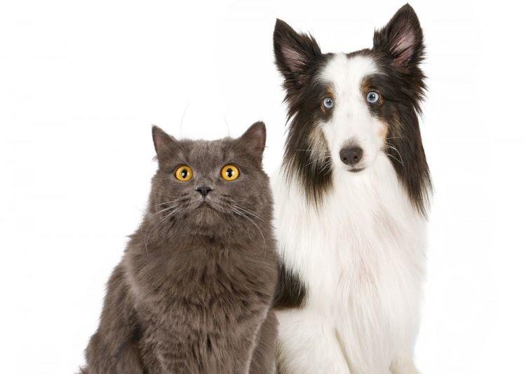 Img laser peligros perros gatos art