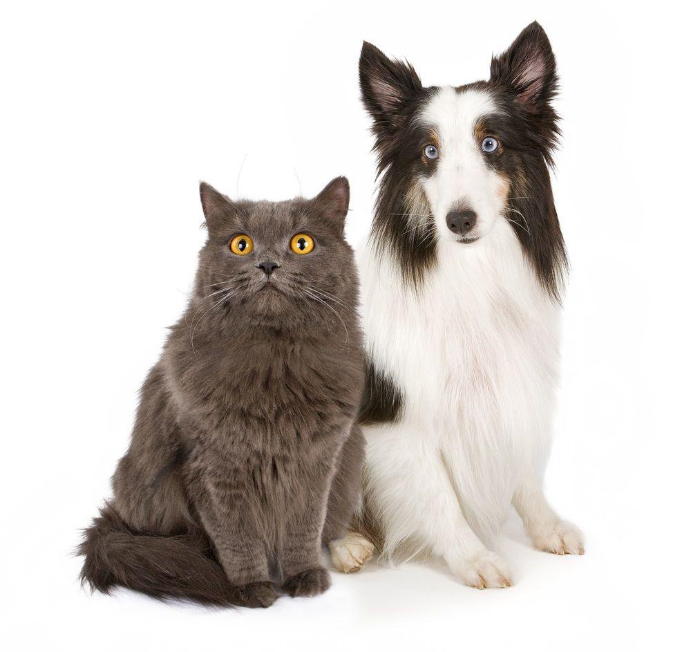 Img laser peligros perros gatos