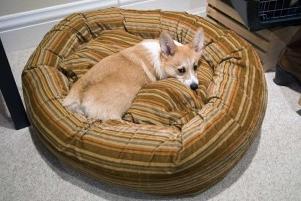 Img leishmaniasis perros mascotas enfermedades dolencias mascotas animales garrapatas art