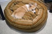 Img leishmaniasis perros mascotas enfermedades dolencias mascotas animales garrapatas listado