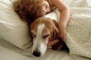 Img leyes defensa animales perros gatos mejorar listado