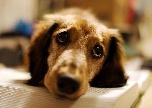 Img libros imprescindibles para entender perro art
