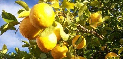 Limoi-irud limoi art