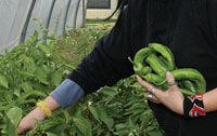 Img los vegetales