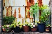 img_macetas plantas list_ 1