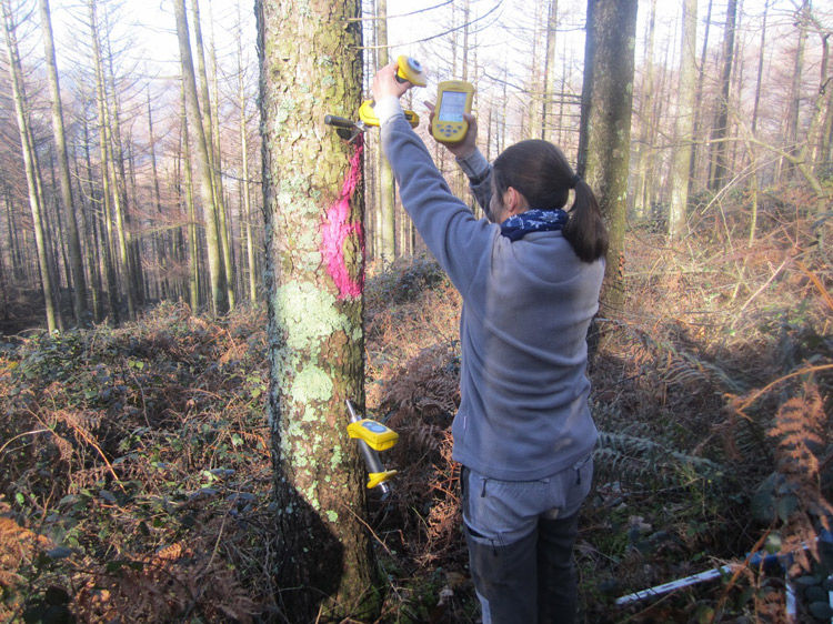 Img madera documental