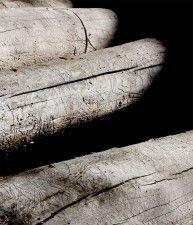 Img madera eucaliptus articulo