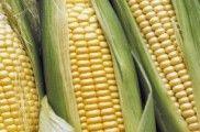 Img maiz listado