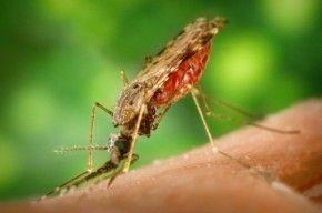 Img malaria articulo