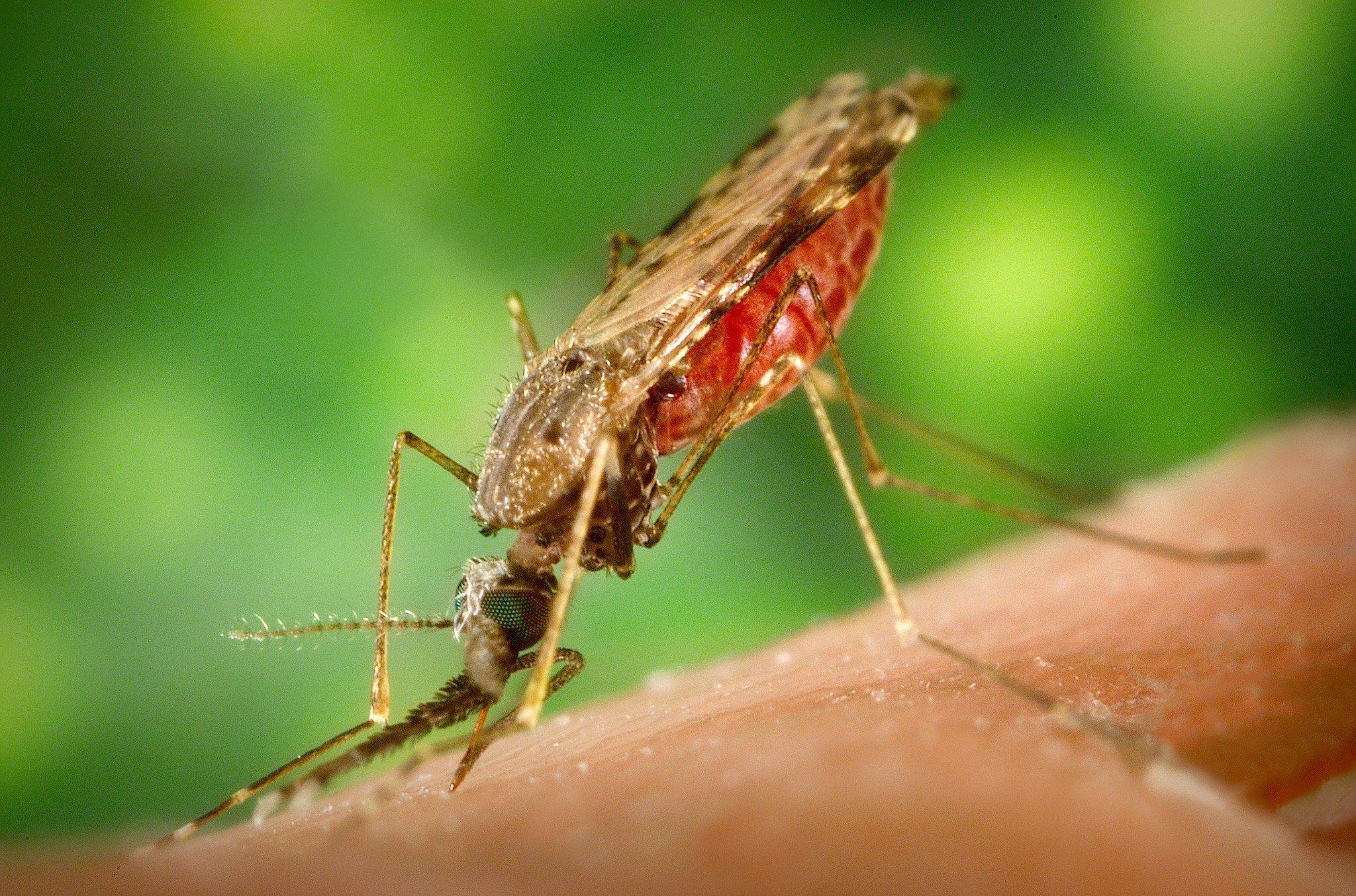 img_malaria