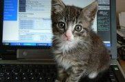Img maltrato animal internet pasos para denunciar videos violentos listado