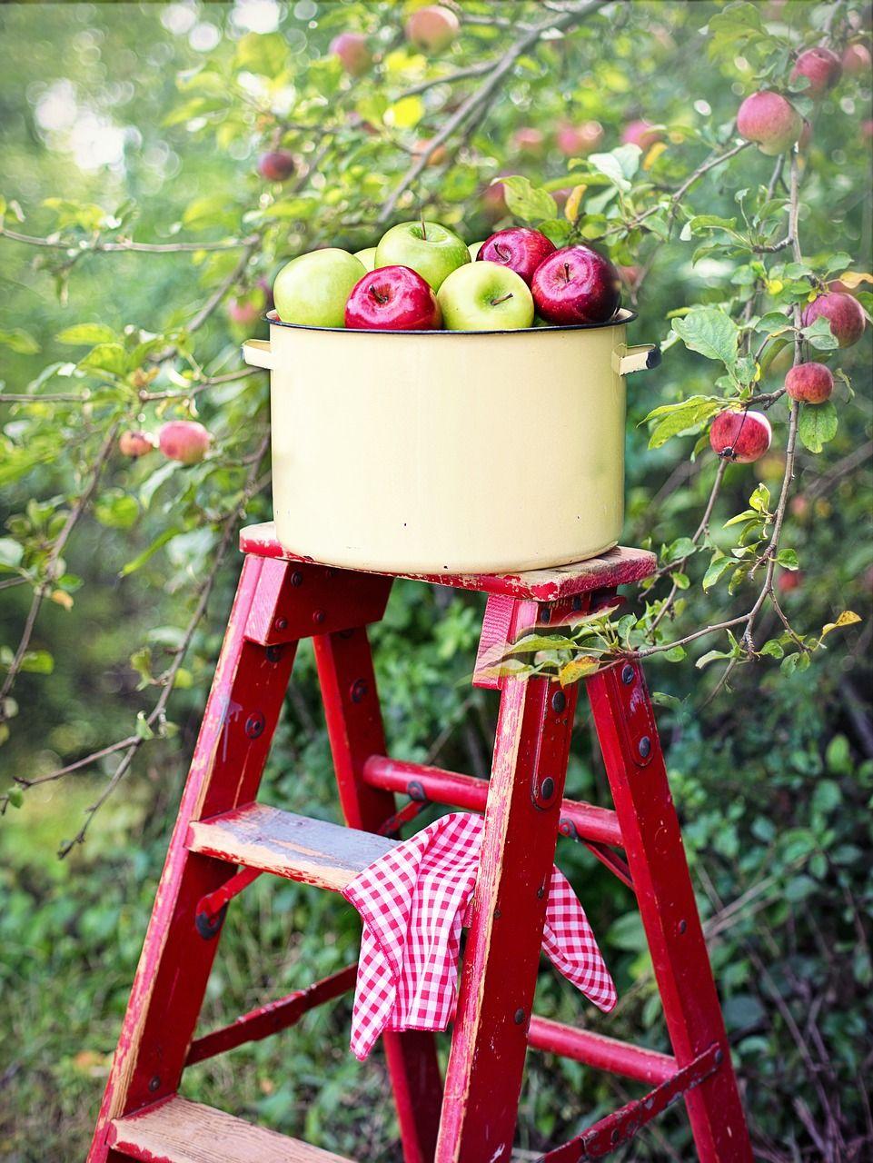 Img manzanas recolecta hd