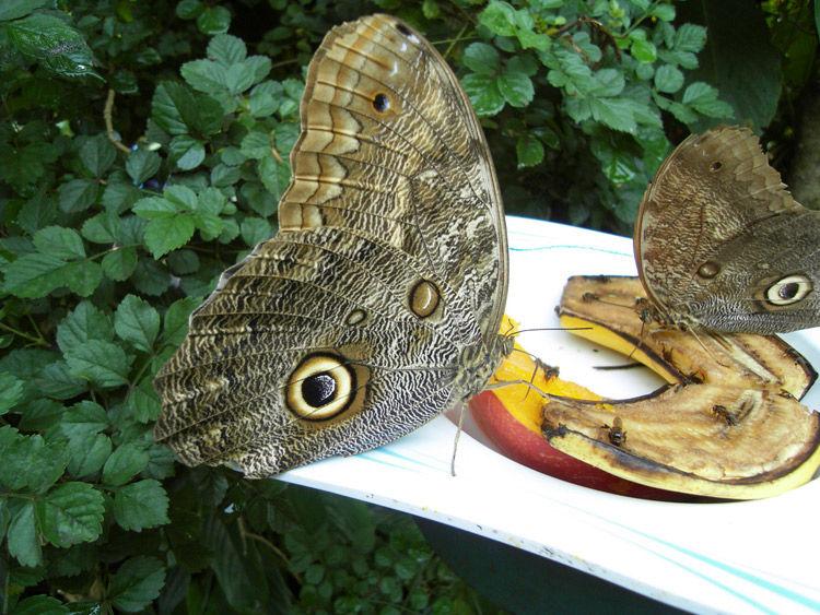Img mariposa comedero