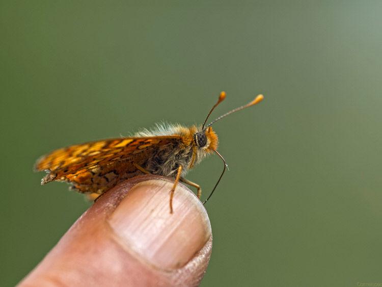 Img mariposa dedo
