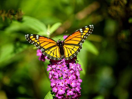 Img mariposa