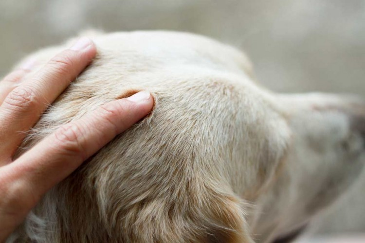 Img masajes perros cabeza