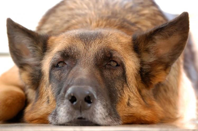 Img mascotas alzheimer gatos perros salud art