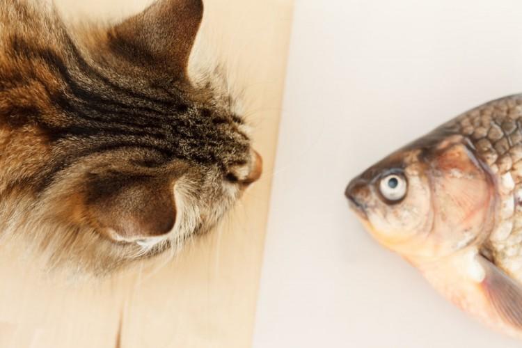 Img mascotas pescado aceite beneficios art