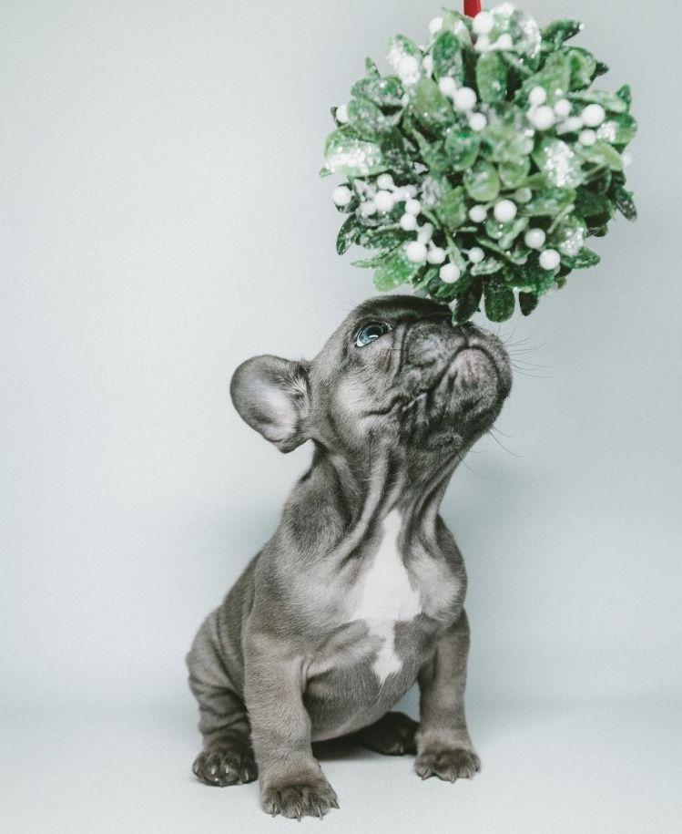 Img mascotas plantas invierno peligros art
