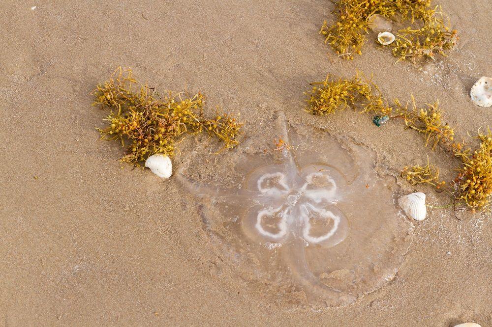 Img medusas hd