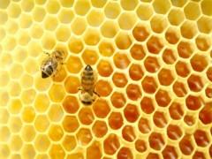 Img miel polen1