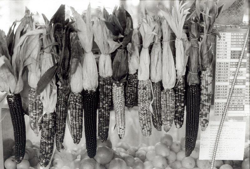 Img millo corvo