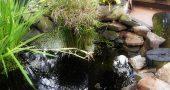 Img mini estanque