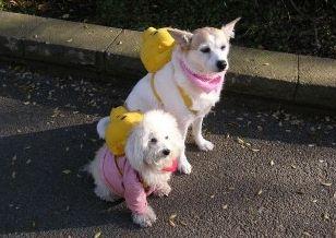 Img mochilas para perros ayuda paseos art