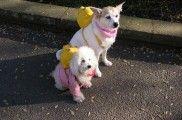 Img mochilas para perros ayuda paseos listado