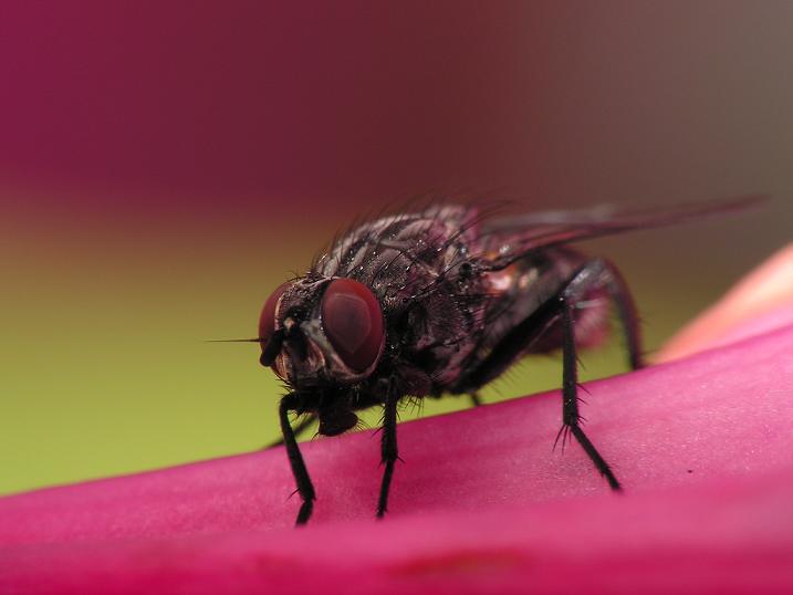 Img mosca
