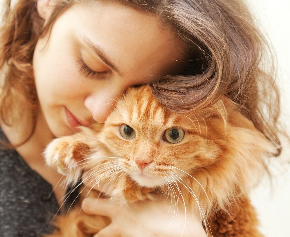 img_muerte gatos