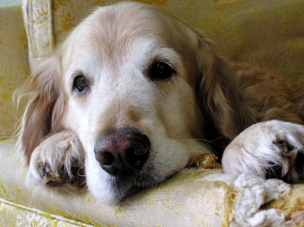Img muertes perros fallecimientos consejos que hacer animales mascotas consejos