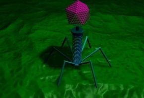 Img naturalismus bacteriophage