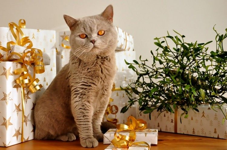 Img navidad decoraciones mascotas 2 art
