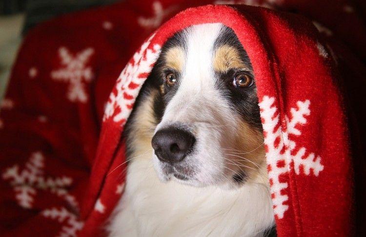 Img navidad decoraciones mascotas art