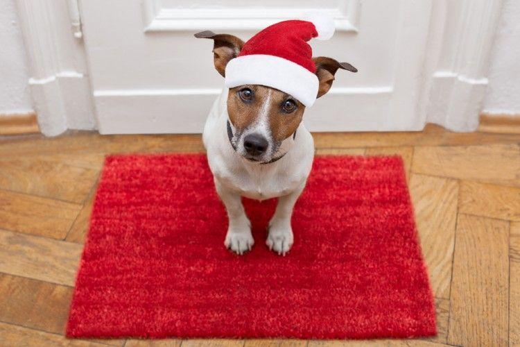 Img navidad decorar perros gatos1 art