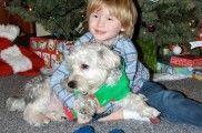 Img navidad perro ideas juegos manualidades cocina listado