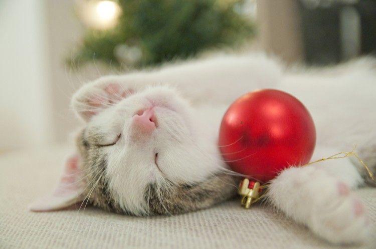 Img navidades perros gatos decorar