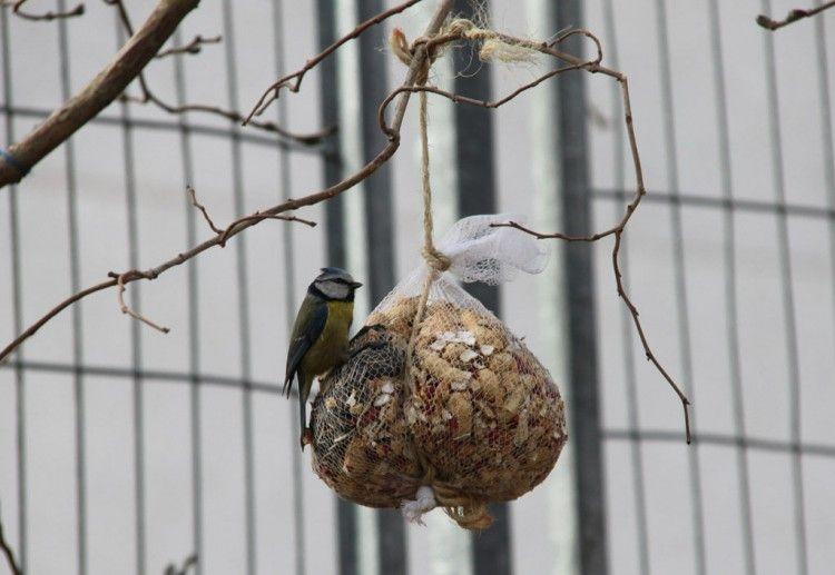 Img nidos