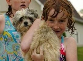 Img nina perro1 piscina art