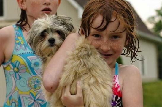 Img nina perro1 piscina listg