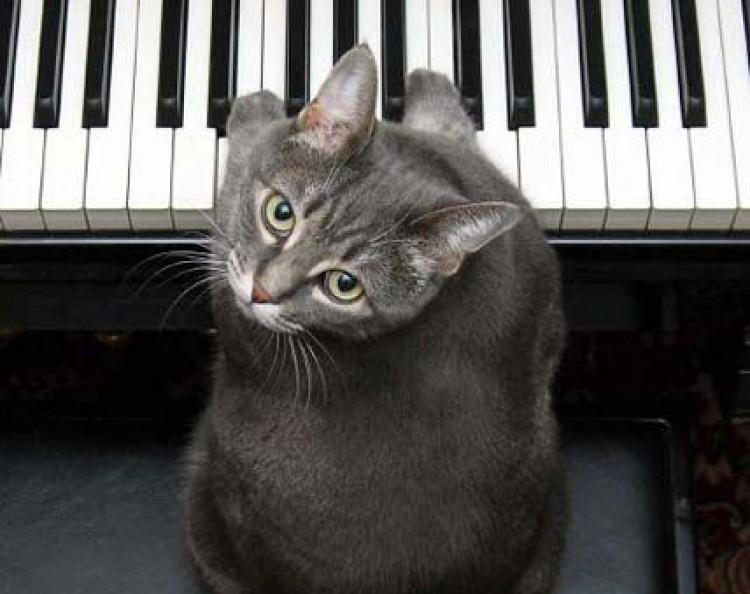 Img nora piano cat art