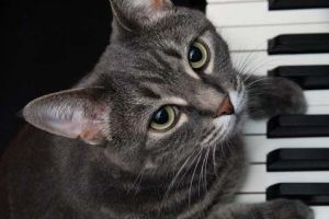 Img nora piano cats gatos famosos youtube redes sociales videos internet animales mascotas art