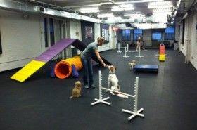 Img obediencia canina art